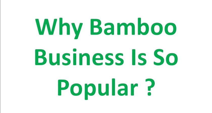 Why Bamboo Business Is So Popular Now A Days ?