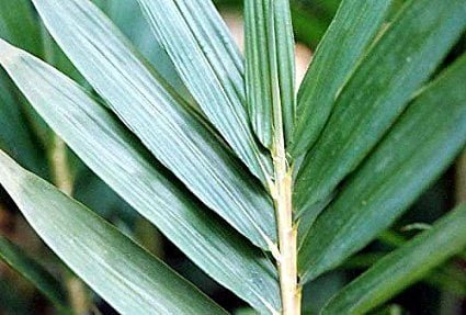 Planting Dwarf Bamboo To make Your Outdoor space More Inviting
