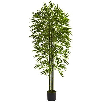 Potted bamboo for people who live in areas with limited space