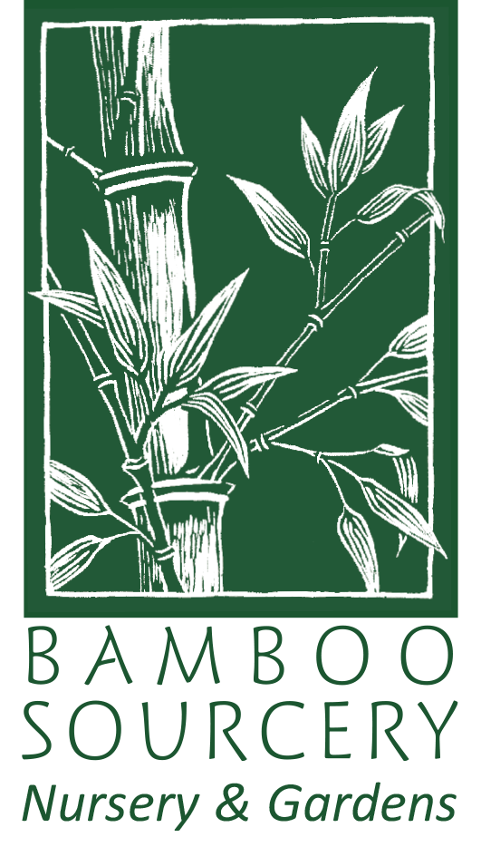 Bamboo Plants for Sale - Bamboo Sourcery Nursery & Gardens
