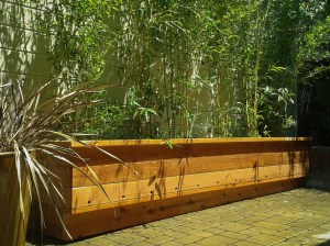 Bamboo for Privacy Screening - Bamboo Sourcery Nursery & Gardens