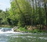 Le Bambou est-il Écologique ? Risques & Avantages