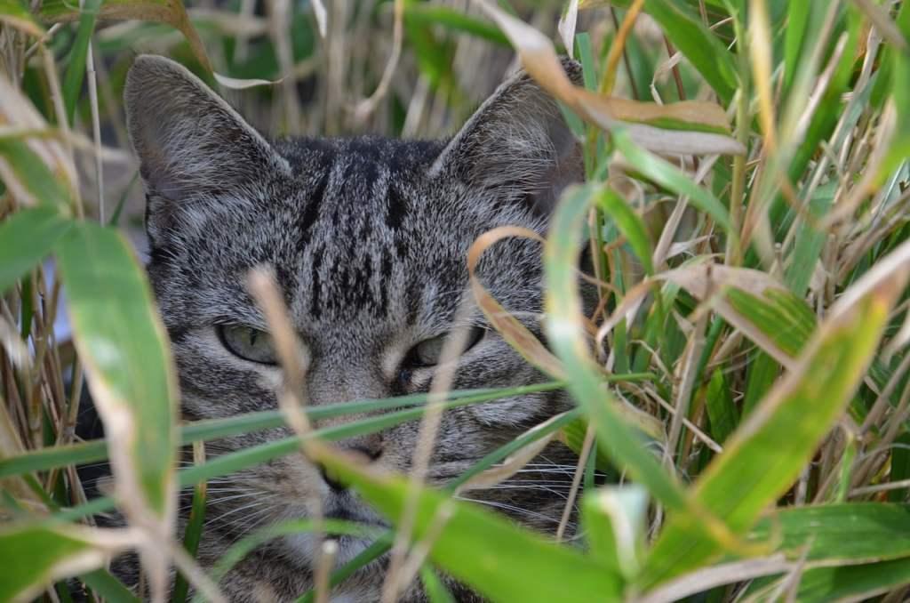 Chat dans du bambou non toxique