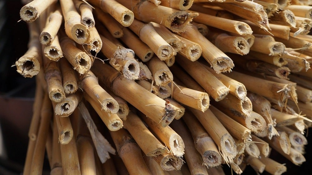 Tuteurs bambou
