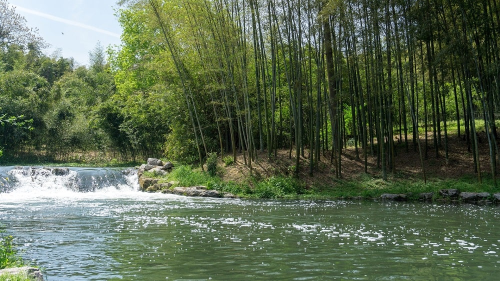 Avantages et inconvénients écologiques du bambou