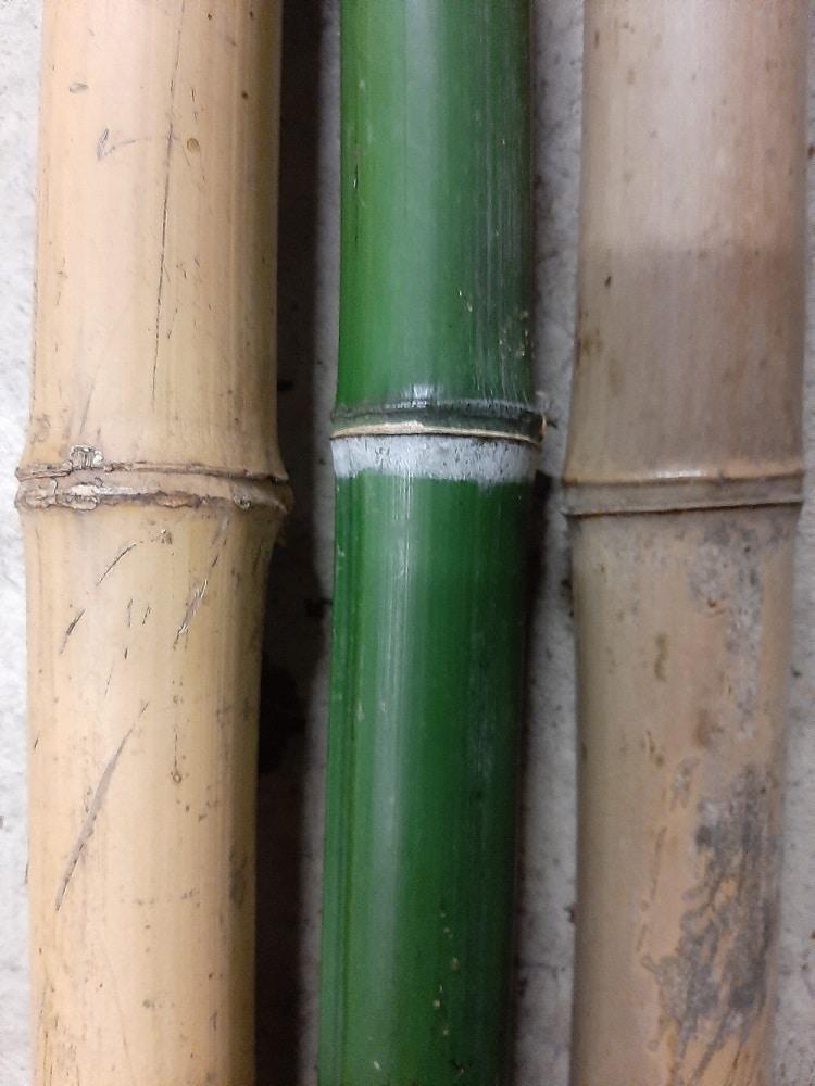 Cannes de bambou sec et vert