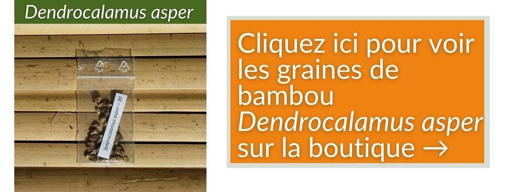 Dendrocalamus asper - graines