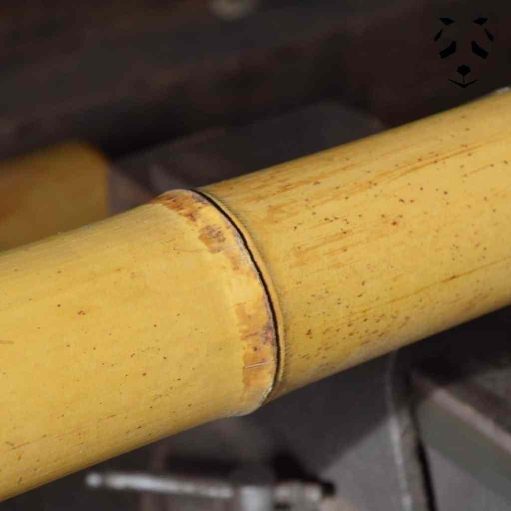 Tronçon de bambou