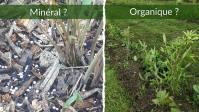 Engrais pour Bambous 2021 le Plus Efficace: Lequel Choisir ?