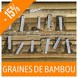 Graines de bambou