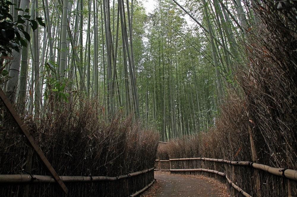 Forêts de bambou au Japon La bambouseraie d'Arashiyama