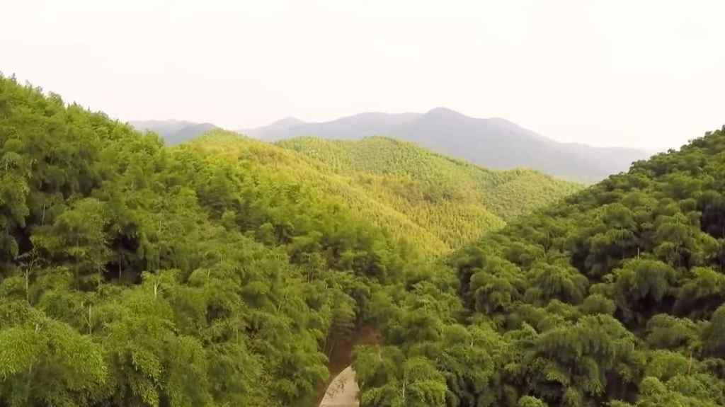 Forêt de bambous MOGANSHAN