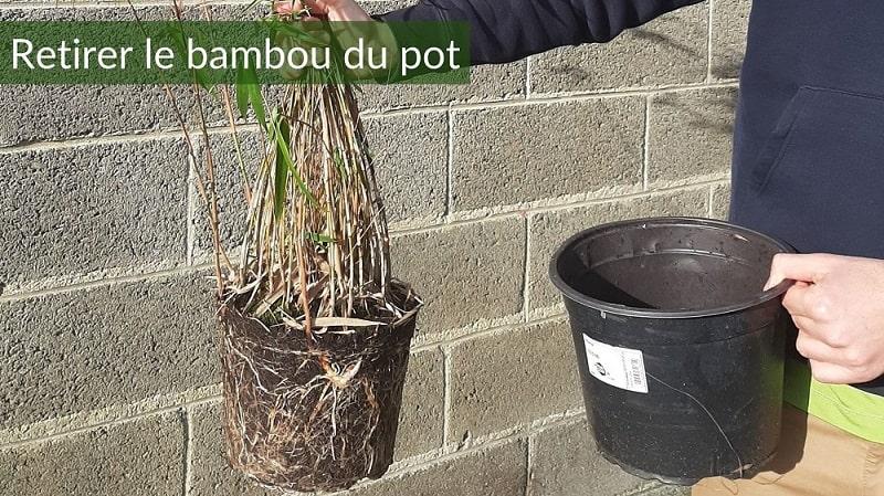 Retirer le bambou en pot