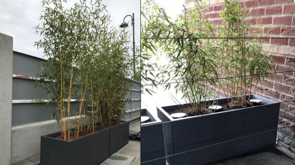 Jardinière pour bambou
