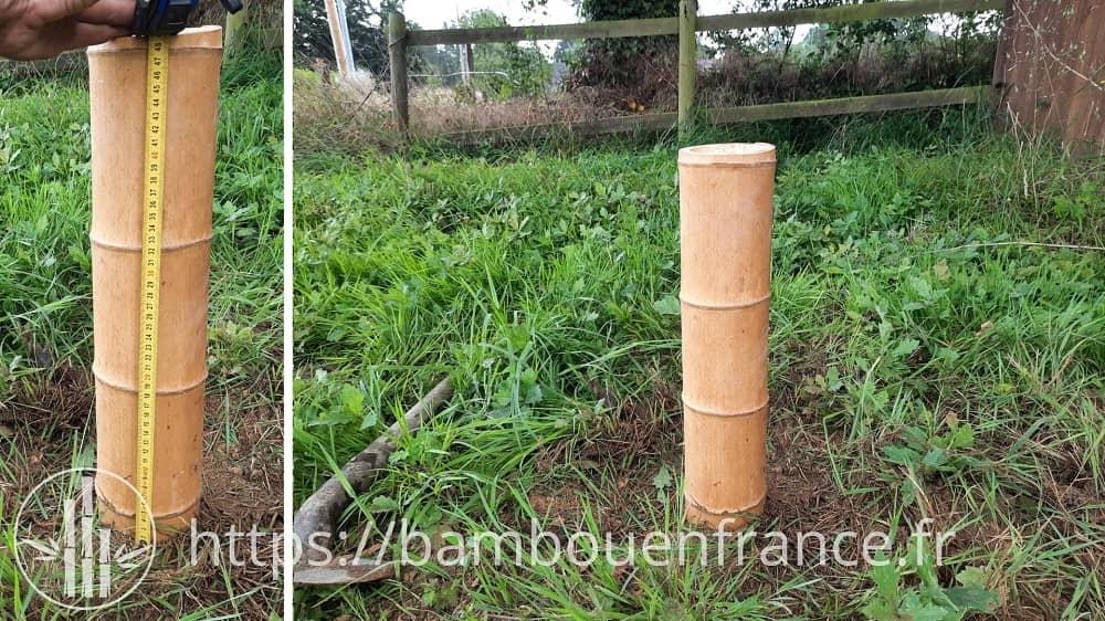 Pourrissement du bambou