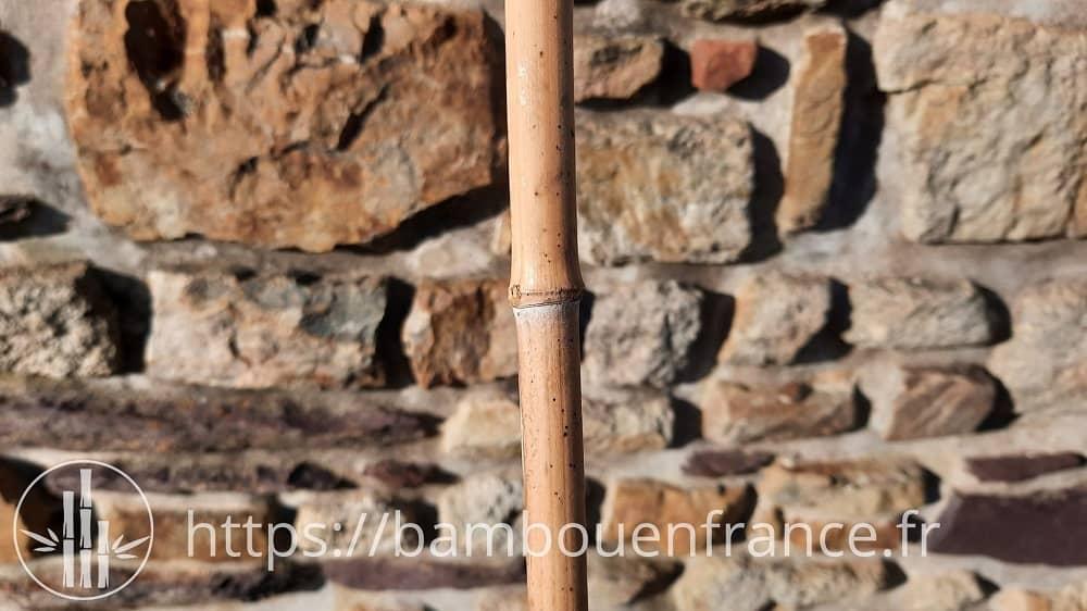 Faire sécher les tuteurs bambou
