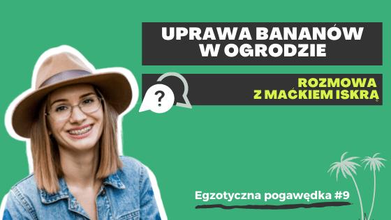 Uprawa bananów w ogrodzie | Rozmowa z Maćkiem Iskrą | Egzotyczna Pogawędka #9