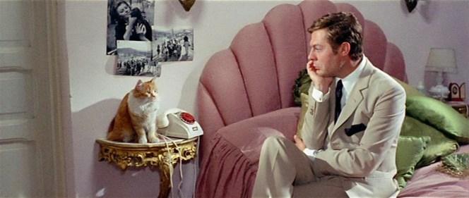 Rusconi finds a kindred spirit in Mara's cat.