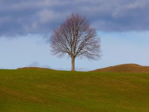 tree-4700_640