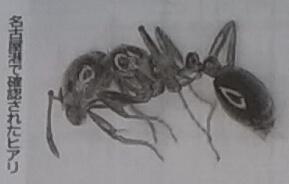 国内で発見されたヒアリの写真