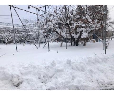 新橋いちゃキャバ・JK制服キャバクラ【ハイスクールbanana】 りか 山形雪
