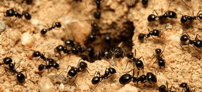 Creando clones en Scratch: el hormiguero infinito