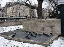 Round table council of the pigeons. I think there must be some conspiracy happening here.