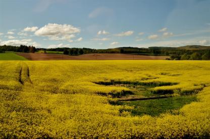 Golden fields of fortune