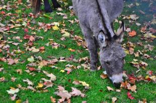 Animal at Waterloo Park