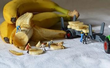 bananos curvos, UE, regulación,industria