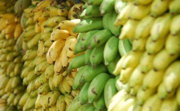 Mercado latinoamericano del banano: aumenta la competencia para Ecuador