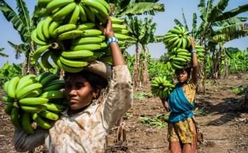 Las mujeres y su importancia en el sector bananero