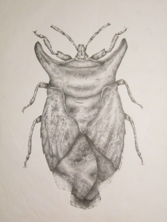 "Bug, 2000, Ink on vellum, 11""x17"". Copyright Rebe Banasiak, The Brush Hilt and Banasiak Art Gallery."