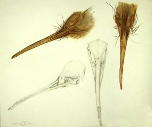 Kiwi Head and Skull Study, 2000, Watercolor on paper, 14x17. Copyright Rebe Banasiak, The Brush Hilt and Banasiak Art Gallery.