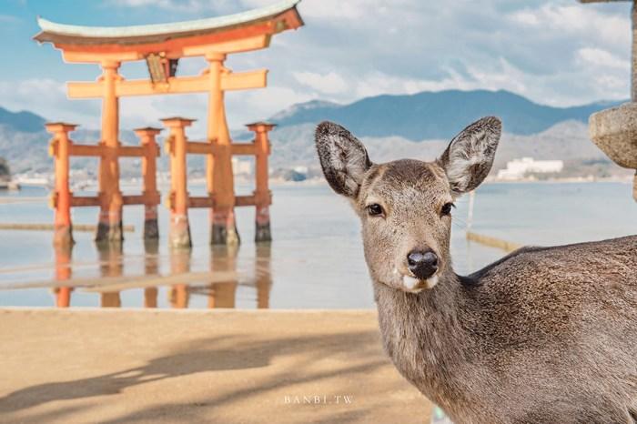 廣島自由行:宮島海上鳥居嚴島神社,與鹿、海共存的日本三大美景(含交通、船班、鳥居整修、潮汐時間、御守)