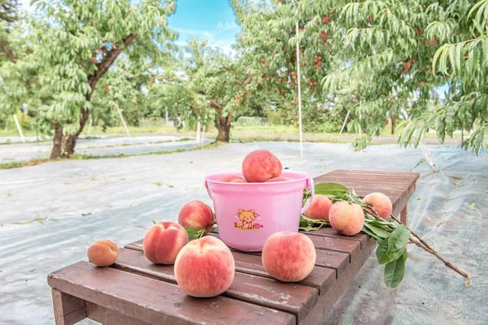 福島摘水蜜桃:Marusei果樹園 香甜水蜜桃與葡萄吃到飽,只要800日幣