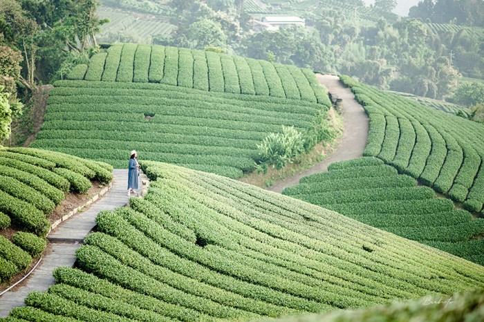 嘉義景點-梅山1314觀景台,雲海中的滿山茶園梯田美景,不輸日本京都靜岡茶園
