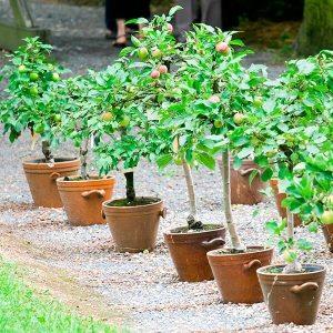 trees_in_pots