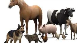banc cu animale, banc cu animale si Dumnezeu, bancuri cu animale, bancuri animale, bancuri despre animale, bancuri animale 2019, bancuri animale noi, bancuri animale tari, bancuri cu animale tari, bancuri cu animale 2019, cele mai tari bancuri cu animale, cele mai bune bancuri cu animale, top 10 bancuri animale, top 10 bancuri cu animale
