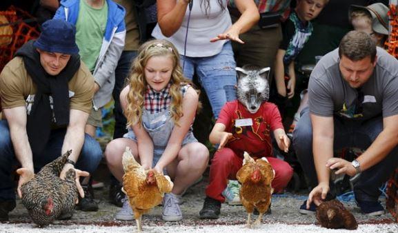 Cara Perawatan Ayam Balap