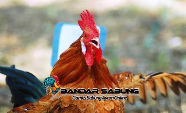 Cara Mengobati Suara Serak Pada Ayam Kicau Yang Efektif