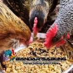 Cara Menjaga Pakan Ayam Tetap Bagus