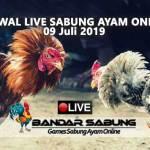 Jadwal Sabung Ayam Online S128 Dan SV388 09 Juli 2019
