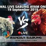 Jadwal Sabung Ayam Online S128 Dan SV388 19 September 2019