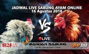 Jadwal Sabung Ayam Online S128 Dan SV388 16 Agustus 2018