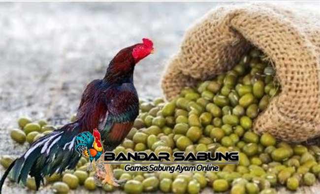 Manfaat Kacang Ijo untuk Ayam Aduan