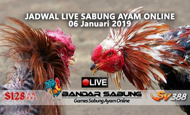 jadwal sabung ayam online s128 dan sv388 06 januari 2019