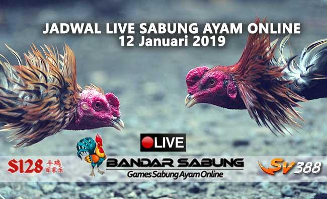 jadwal sabung ayam online s128 dan sv388 12 januari 2019