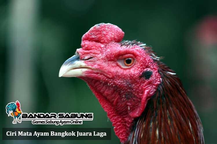Ciri Mata Ayam Bangkok Juara Laga - Sabung Ayam Online