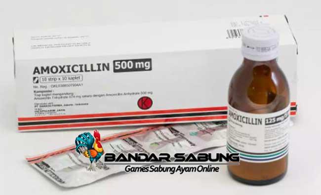 Manfaat Pemberian Obat Amoxicillin Untuk Ayam Bangkok Aduan